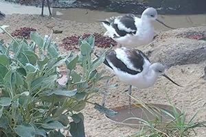 Monterey-Aquarium-Aviary-Cam-(USA)