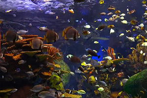 The-Best-Relaxing-Aquarium-(USA)