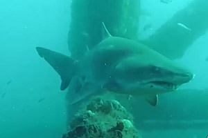 Shark-Cam-(USA)