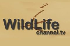 Wildlife-Channel-(United-Kingdom)